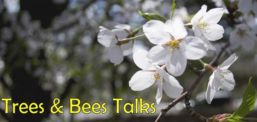 trees-beestalks_title-image