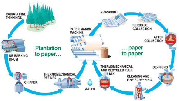 Infographic of how paper is both processed, and can be recycled.