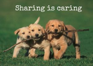 Sharing is caring photo with three dogs sharing a stick.